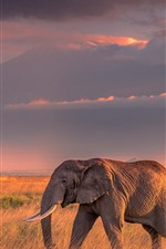 One elephant, grass, clouds