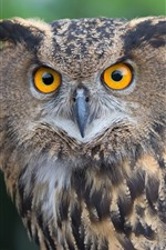 Preview iPhone wallpaper Owl look at you, yellow eyes, bird