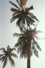 Preview iPhone wallpaper Palm trees, sky, sunshine