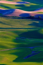 Preview iPhone wallpaper Palouse, green wheat fields, trees, USA