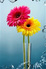 Preview iPhone wallpaper Pink and yellow Chrysanthemum, glass broken