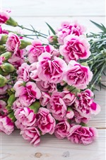 Pink carnation flowers, bouquet
