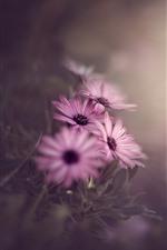 Pink flowers, hazy background, morning