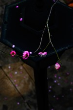 Preview iPhone wallpaper Pink plum flowers, twigs, spring