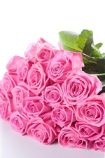 Preview iPhone wallpaper Pink roses, flowers, white background
