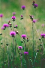 Pink wildflowers, green background, hazy