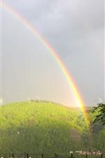 Rainbow, mountain, trees, fog, after rain