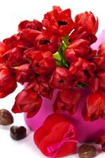 Red tulips, box, white background