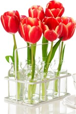 Preview iPhone wallpaper Red tulips, cups, kettle