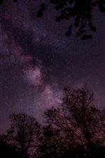 Estrelado, estrelas, céu roxo, árvores, noite