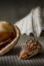 Still life, seashells