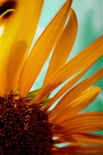 Preview iPhone wallpaper Sunflower close-up, petals, hazy background
