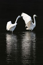 Preview iPhone wallpaper Three egrets, pond