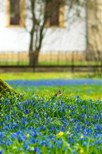 Preview iPhone wallpaper Tree trunk, blue flowers, spring