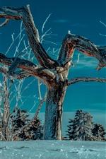 iPhone壁紙のプレビュー 木、小枝、雪、冬