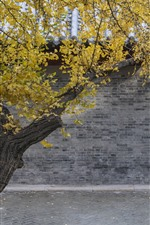 Preview iPhone wallpaper Tree, yellow leaves, wall