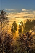 Trees, forest, sunrise, fog, morning