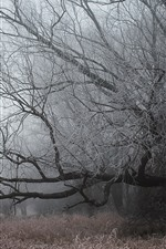 Trees, frost, grass, fog, cold