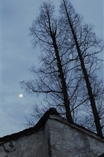 Preview iPhone wallpaper Trees, house, sun