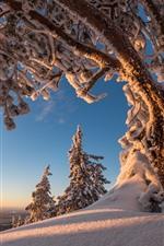 iPhone fondos de pantalla Árboles, nieve, invierno, paisaje natural.