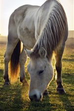 Preview iPhone wallpaper Two horses, grassland, sunrise, morning