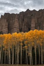 Preview iPhone wallpaper USA, Colorado, trees, cliff, autumn