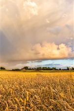 Preview iPhone wallpaper Wheat field, rainbow, clouds, countryside