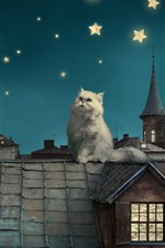 White cat, roof, moon, stars, creative picture