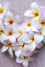 White plumeria flowers, water droplets, love heart