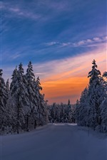 Winter, dusk, trees, snow, cold