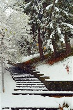 Winter, snow, trees, stairs