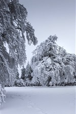 Winter, thick snow, trees, twigs