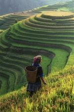 Beautiful rice terraces, China, countryside, woman, slope, fog, morning