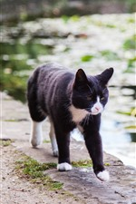 Preview iPhone wallpaper Black cat walking, pond