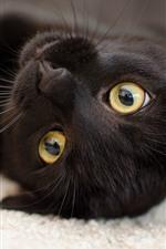 Preview iPhone wallpaper Black kitten, yellow eyes, playful