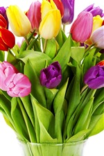 Colorful tulips, white background