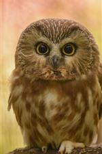Preview iPhone wallpaper Cute little owl, standing