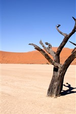 Dead tree, desert, hot