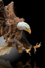Preview iPhone wallpaper Eagle flight, wings, black background