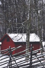 Forest, trees, hut, snow, winter