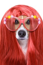 Funny animal, dog, hairstyle, glasses