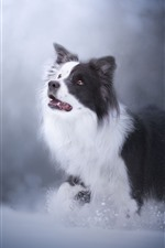 Furry dog, look, snow, hazy