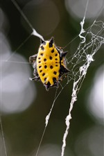 Insect, spider web