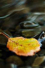 Uma folha amarela, água