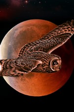 Owl flight, moon, night