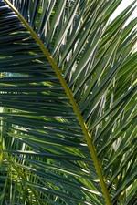 Folhas de palmeira, plantas