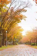 Parque, estrada, árvores, folhas amarelas, outono