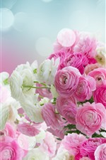 Pink and white ranunculus flowers, glare