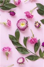 Pink flowers, roses, green leaves, pink background