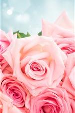 Rosas cor de rosa, buquê, brilho, romântico